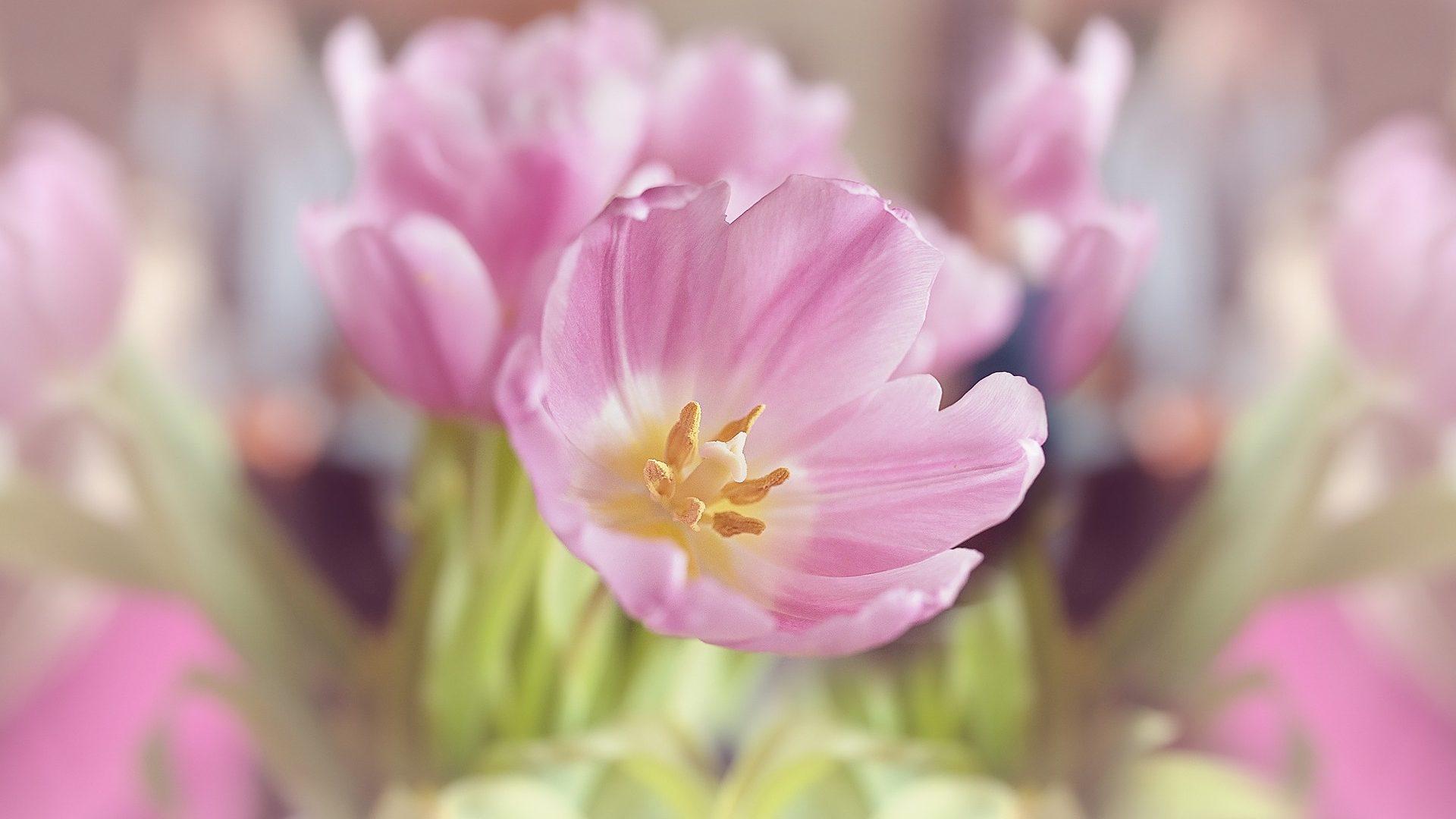 Blüte in Pastellfarben