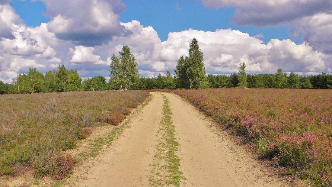 Sandiger Weg in einer Heidelandschaft